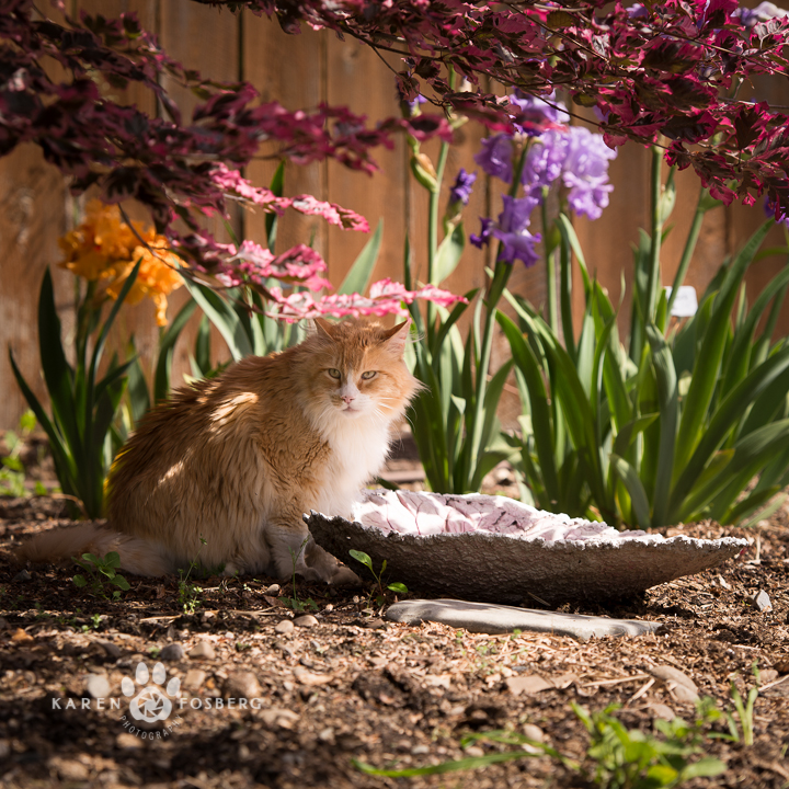Orange cat outside by the flowers-fb-2