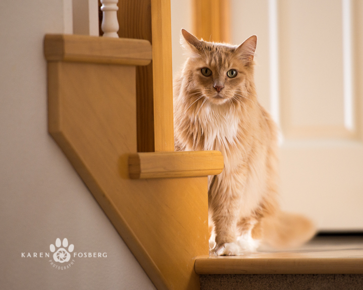 cat by stairway-fb-6