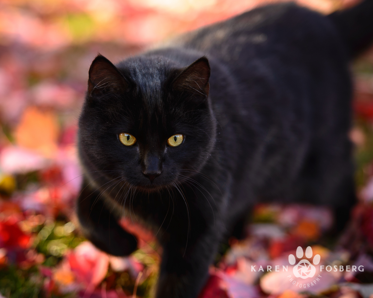 Lungu-cats-photography-11-13-2