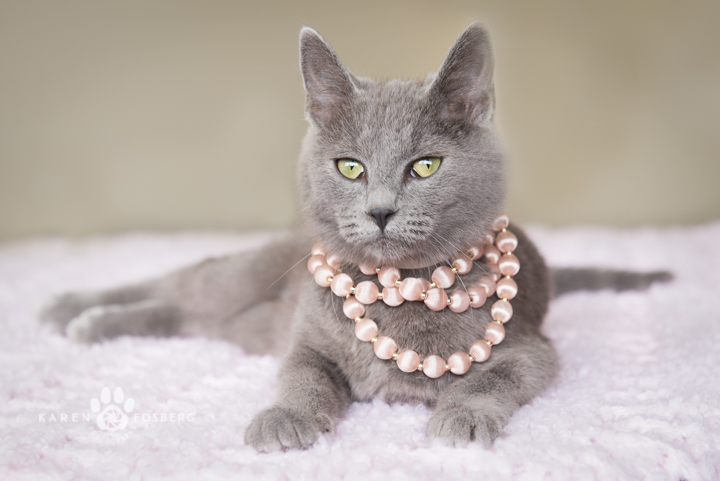 grey cat with pink pearl necklace