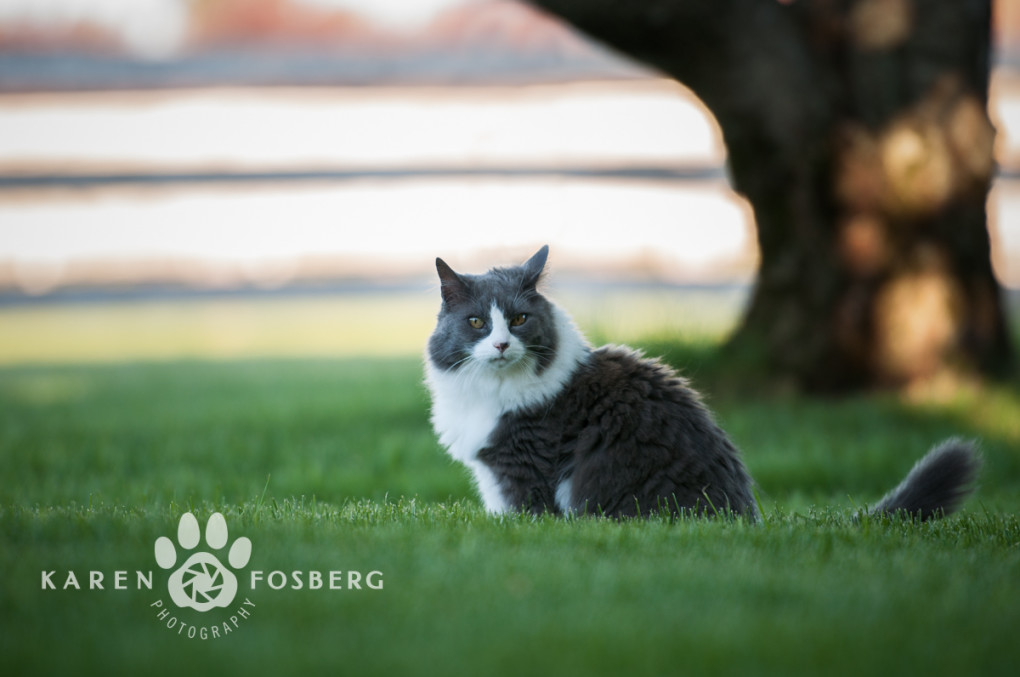 grey-white cat in grass