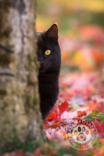 cats-feline-photography-2013-7