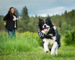 Border Collie running in the field with owner in the background