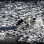 water-ocean-dog-pet-photography-2