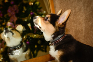 _DSC2645-corgi-cats-dogs-photography-fb-2013