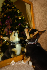 _DSC2656-corgi-cats-dogs-photography-fb-2013