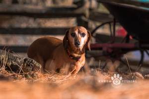 _DSC5589-cats-dogs-photography-fb-2014