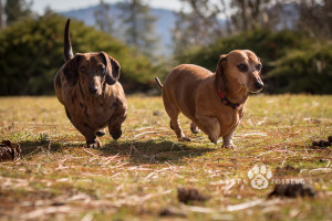 _DSC5604-cats-dogs-photography-fb-2014