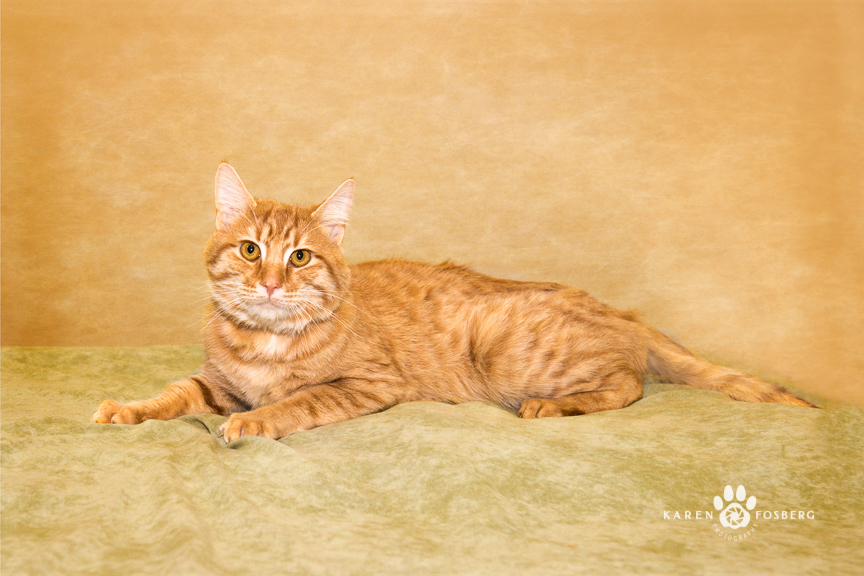 Karen-Fosberg-Photography-pet-cat-dog-adopt-Spokane-1-3