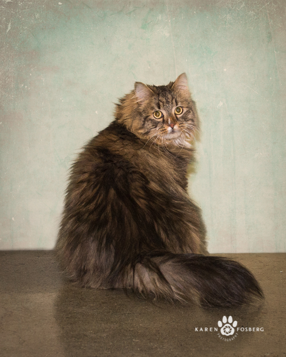 Karen-Fosberg-Photography-pet-cat-dog-adopt-Spokane-2