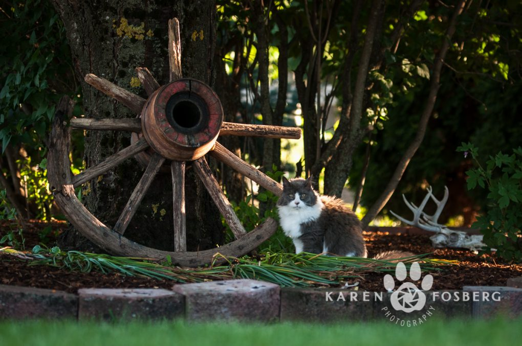 cats-feline-photography-2013-2