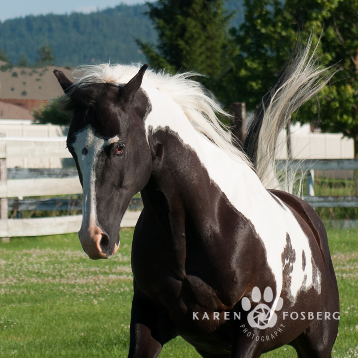 horses-pet-photography-7.5-long-edge-2013-1
