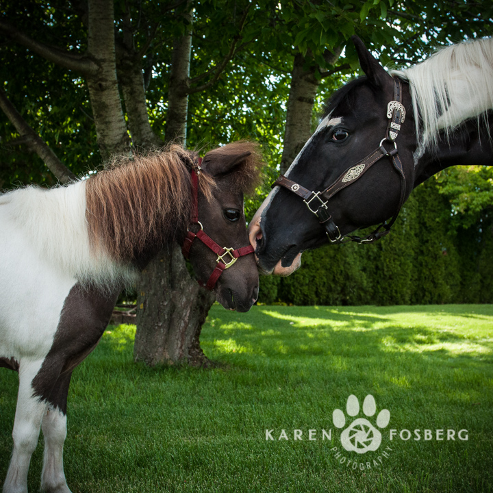 horses-pet-photography-7.5-long-edge-2013-6